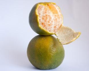 orange-390673_640