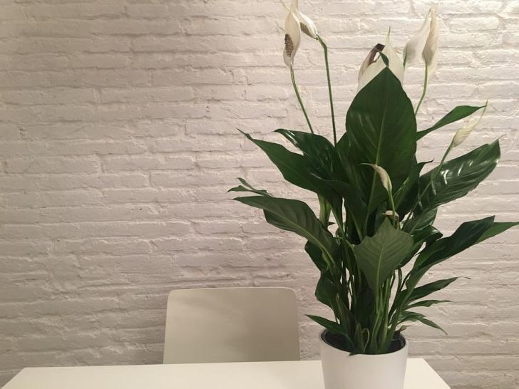 plant-1978269_960_720