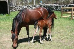 foal-3410412_640