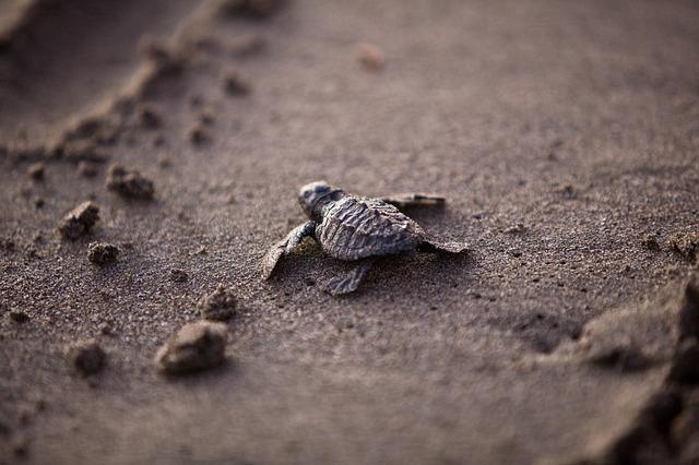 sea-turtle-356125_640.jpg